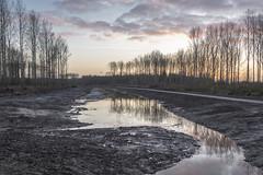 """De Elzen"" (Pieter Mooij) Tags: dordrecht polderdebiesbosch deelzen deelzendordrecht slik biesbosch zuidholland fujixt2 fujifilmxt2"