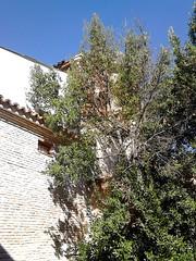 Antezana Hospital, founded 1483, Grounds, Alcala de Henares , Madrid (d.kevan) Tags: spain madrid alcaladehenares hospitaldeantezana brickwork walls plants details trees buildings 1483 parksandgardens