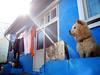 Cute guard (MelindaChan ^..^) Tags: busan skorea 釜山 cute dog doggie guard hous gamcheon village 甘川文化村 house home color colorful art chanmelmel mel melinda melindachan animal