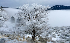 Altitude (The.Mickster) Tags: trees cold frost winter frozen ice altitude mountains hereios fog idaho 365 snow clouds