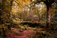 Otoño en el Saja (Luis Marina) Tags: otoño saja ucieda cantabria rojo bosque monte autumn red tone calido wood forest caminos reserva nature tree arbol grass green verde park naturepark