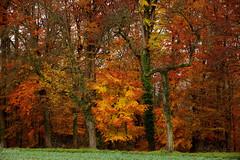 I (Zeituhr) Tags: zeituhr november fall herbst fog