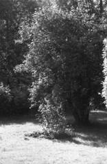 The garden (rotabaga) Tags: sverige sweden småland torsås svartvitt blackandwhite bw bwfp