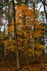 Tree (jplords) Tags: fall colors fallcolors woodlandphotography trees woodland tennessee bushes plants outdoor outdoors outdoorphotography foliage landscape landscapephotography light winter leaf leaves cedar cedars cedartree cedarsoflebanon