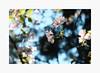 Dreaming of Spring III (bnishimoto) Tags: fuji fujifilm myfujifilm xpro2 hakonegardens saratoga bayarea photoessay classicchrome color japanesegarden nature cherryblossom flower spring 1855mm