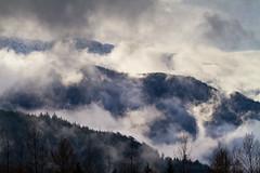 Foggy forest Squamish (tristanrayner.com) Tags: green blackandwhite bw fog mist fall autumn winter seasons rain clouds pnw bc british columbia squamish