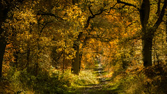Savernake Forest, Wiltshire (PINNACLE PHOTO) Tags: savenake forest wood autumn colour fall trees leaves paths wiltshire