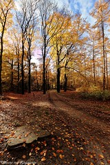 The last leaves (Wouter van Wijngaarden) Tags: autumn herfst nederland dutch thenetherlands van woutervanwijngaarden baarn wout holland bomen trees tree bos wood forest canon eos 600d efs1018mmf4556isstm kleuren herfstkleuren colors thelastleaves