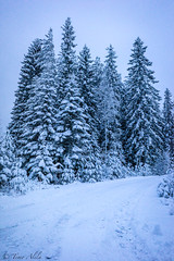 Blue moment before darkness (LuonnonKuvaaja) Tags: spruce road forest snowy blue moment lasikangas ylipää raahe finland winter trees country