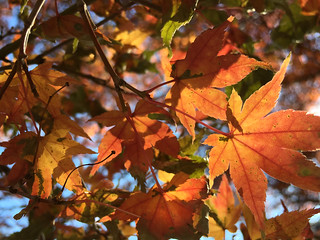 Cylburn Arboretum ~ Fall Glory