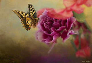 Butterfly and Flower...