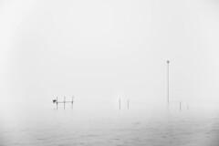 Nature in minimalism (marielledevalk) Tags: mist winters fortvuren winter water holland bird black white river dutch