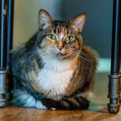 javacats10Dec20170228.jpg (fredstrobel) Tags: javacafecats javacatscafe atlanta places animals ga pets cats usa georgia unitedstates us
