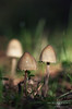 Macro 06 (Javier Colmenero) Tags: alava euskadi macrophotography nikon nikond7200 opakua sigma sigma105mm bokeh desenfoque macro macrofotografia mushrooms nature setas