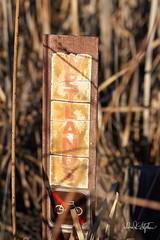 Wetlands (dcstep) Tags: dsc1962dxo sonya7riii fe100400mmf4556gmoss fe14xteleconverter wetland sign wetlandsign faded brown reeds cattail allrightsreserved copyright2017davidcstephens dxophotolab cherrycreekstatepark colorado greenwoodvillage usa nature urban urbannature wetlands rust