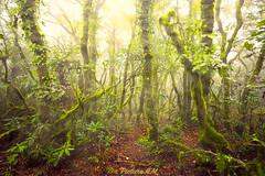 Bosque de la Niebla 5 (PictureJem) Tags: arboles trees niebla bosque nature naturaleza
