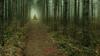 Spooky woods (Milen Mladenov) Tags: 2017 bulgaria d7200 landscape montana autumn dark fog foggy forest haze hazy mist nature nikond7200 road spooky spookywoods teal view