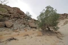 IMG_5209 (Gibrán Nafarrate) Tags: laguna salada bajacalifornia lagunasalada baja vw volkswagen desert desierto nature camping canon