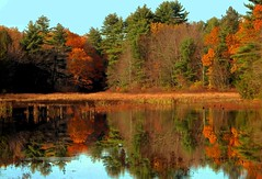 Fall Reflection (Icanpaint1) Tags: wetreflections fallfoliage fall autumn fallcolors exeterriver wjtphotos newhampshire