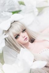 Iplehouse Cordelia - White Lily (ElysDoll) Tags: iplehouse cordelia jid msd bjd abjd doll asianballjointeddoll balljointeddoll juvenileiplehousedoll peachgold glamour lutswig handmadedollclothes handmadebjdclothes lingerie