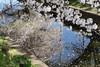 DSC01707 (維尼賈許) Tags: 2017tokyotrip a7m2 day6 japan zeissbatis1885 埼玉県 川越市 kawagoeshi saitamaken 日本 jp
