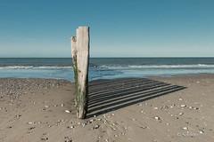 Les piquets en bois de la plage de Sangatte-2.jpg