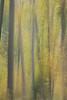 L'automne qui file... (Explored 2017-11-18) (Gisou68Fr) Tags: arbres trees forêt woods automne autumn fall flouintentionnel intentionalblur canoneos650d filé icm intentionalcameramovement