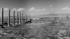 Ruines Romaines, Djemila, Algérie (BISKER Mohamed) Tags: ruines romaines algeria algérie colonnes paysage histoire antiquité nb bw