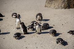 2016_South_Africa-201608082064 (gonzalo22lopez) Tags: southafrica sudáfrica