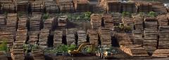 Wood! (rosch2012) Tags: neuseeland wood newzealand day daylight tageslicht arbeit work drive fahren transport loader lader frontloader stamm stange stammholz barloader