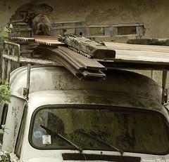 Chat sur une 4L (Noemie.C Photo) Tags: cat chat gato marron brown noir 4l coche voiture car black campaign campagne rural old vieux mousse vintage bois wood renault animal rust rusty rouillé mur wall