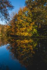Autumnal Bürgerpark Bremen V (janmalteb) Tags: bremen deutschland germany baum tree autumn herbst farben colors wasser water himmel sky reflektion reflection canon eos 1000d weitwinkel wide angle