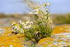 Ut-Fredeln (Anders Sellin) Tags: fredlarna hav klippor pelle skärgård sverige sweden utfredeln utskärgård vatten archipelago baltic island sea sommar stockholm sumer water östersjön öar