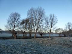 Winter Morning (Gilder Kate) Tags: richmond richmonduponthames richmondpark roehampton london panasoniclumixdmctz70 panasoniclumix panasonic lumix dmctz70 tz70 beverleybrook mist misty morning frost frosty
