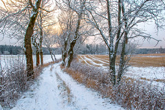 Countryside Scenery (bjorbrei) Tags: road pathway trees trunks grass field snow winter countryside rural maridalen oslo norway