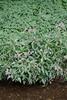 CKuchem-6712 (christine_kuchem) Tags: ackerblumen bach blühstreifen blüte blüten feldblumen natur naturschutz neophyt pflanze springkraut sumpf ufer uferpflanzen wiese wiesenblume wildblumen drüsiges eingewandert gewässer naturnah rosa