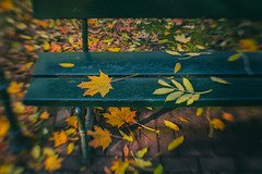 Yellow Leaf on Bench - HBM! (suzanne~) Tags: leaf bench fall autumn benchmonday park outdoor lensbaby composerpro sweet35