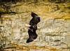 Bald Eagle... (Mike Millspaugh) Tags: nature bird bald eagle indiana idnr natural resources fly salamonie river