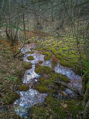 Anaerobic microbe oil sheen (Juniper Hill Garret) Tags: anaerobic wetland hiawathanf michigan up
