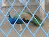 Caged Elegance (Raees Mughal) Tags: raees raeesmughal pakistan peshawar peshawarcantonment park رئیس رئیسمغل پشاور پاکستان