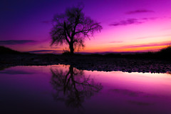 Totally Blurred Tree (333/365) (iratebadger) Tags: nikon nikond7100 d7100 dark countryside colours colors purple pink water reflections thesameoldsh1t iratebadger project365