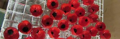 Some of our painted poppies