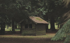 Whuts in here then? (music_man800) Tags: mood moody mystery mysterious remote eerie rural country countryside hut shed woodland woods forest cabin atmosphere atmospheric conifers conifer tree trees leaves fir dark lynford arboretum norfolk uk united kingdom roadtrip holiday october day grain grainy creative photography edit gimp gimp2 canon 700d arty artistic nature natural lighting light ambience outdoors flora pun cold wouldlookgoodinfog landscape colours washed out brightness brown green prime lens
