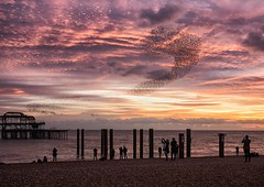 watching and photographing the display (sussexscorpio) Tags: 2017 beach brighton eastsussex november seafront starlings sussex sussexscorpio westpier birds dusk evening murmuration sea seashore sunset water flock silhouette silhouettes photographers people watching nature natural sky clouds color colours purple pink questionmark pier architecture derelict posts coloumns landscape seascape ocean skyline sturnusvulgaris sturnidae flight flying formation iconic landmark uk europe shoreline