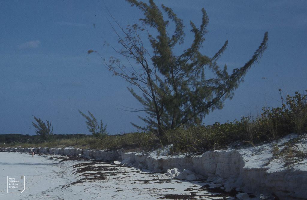 Erosion, main curve of West Beach. Little San Salvador