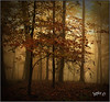 The Little Tree In A Big Forest.. (Picture post.) Tags: landscape nature green trees mist forest autumn paysage arbre brume beech