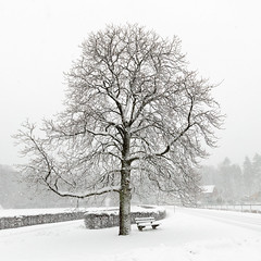 Boom (doevos) Tags: boom hoenderloo hogeveluwe nederland snow