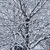 Entrelacs (_ Adèle _) Tags: hiver neige bruxelles arbre branches entrelacs réseau web noiretblanc nb monochrome bw blackandwhite extérieur rue