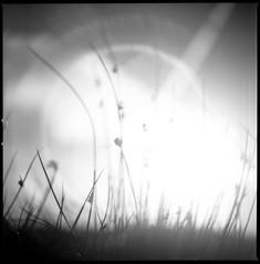 Tales from the Petzvar Sun (Mark Rowell) Tags: ribblehead yorkshire uk sun hasselblad 2000fc petzvar petzval 120mm 6x6 mediumformat fuji acros film
