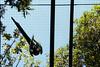 _MG_4830 (Malu Green!) Tags: fozdoiguaçu fozdoiguassu paraná parquedasaves cataratasdoiguaçu cataratasdoiguassu tríplicefronteira aves bird tucano pavão arara papagaio flamingo pato duck ganso cisne swan beijaflor cobra snake serpente borboleta butterfly araraazul quati selfie yellow yellowraincoat raincoat capadechuva picapau woodywoodpecker cachoeira waterfall catarata falls mesquita mosque jewish judeu buda buddha templo temple buddhist budista buddhism budismo estatua statue amarelo